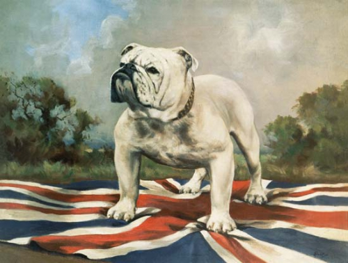 british_bull.jpg