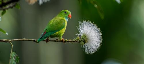 oiseau_branche.png